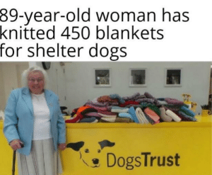 Wholesome af: 39-year-old woman has  knitted 450 blankets  for shelter dogs  DogsTrust Wholesome af