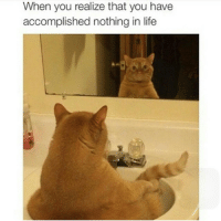 dankcatmemes dankmemes funnycats lol comedy catmeme meme: When you realize that you have  accomplished nothing in life dankcatmemes dankmemes funnycats lol comedy catmeme meme