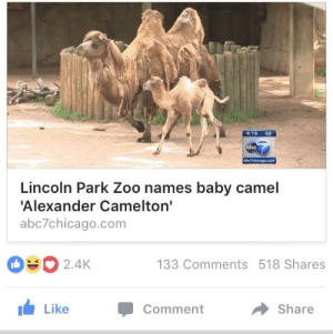 Abc, Target, and Tumblr: 4:19 66  abc  Lincoln ParK Zoo names baby camel  Alexander Camelton'  abc7chicago.com  2.4K  133 Comments 518 Shares  LikeCommentShare doctorjohnwatson:  his legacy