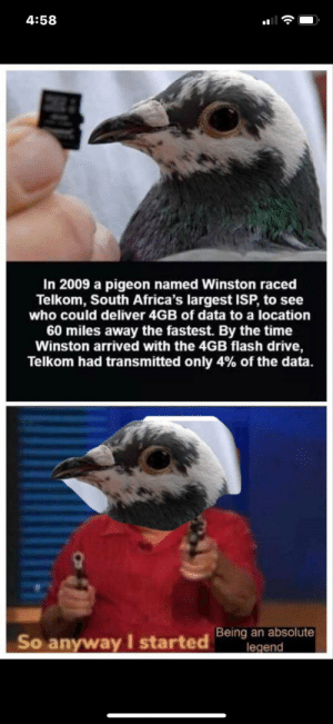 Haha: 4:58  In 2009 a pigeon named Winston raced  Telkom, South Africa's largest ISP, to see  who could deliver 4GB of data to a location  60 miles away the fastest. By the time  Winston arrived with the 4GB flash drive,  Telkom had transmitted only 4% of the data.  Being an absolute  legend  So anyway I started Haha
