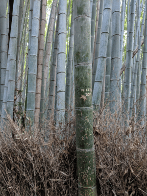 Beautiful, Trashy, and Forest: 4-6-18  2019  LS  JU  LINEE AM When people personalize a beautiful bamboo forest