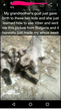 Goat, How To, and Kids: 4/6  My grandmother's goat just gave  birth to these two kids and she just  learned how to use Viber and sent  me this picture trom Bulgaria and it  honestly just made my whole week  Фатме садак  April 4 2018 11:21 AM <p>Baby Goats!</p>