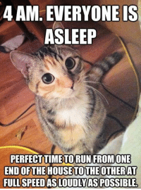 "Cats, Funny, and Meme: 4 AM. EVERYONEIS  ASLEEP  PERFECTTIMETORUN FROMONE  END OFTHE HOUSETOTHEOTHERAT  FULL SPEEDAS LOUDIYASPOSSIBLE FUNNY CAT MEME ""4 AM"" FRIDGE MAGNET 5' X 3.5' #humor #cats #funnymemes"