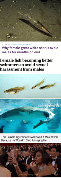 Funny, Shark, and Fish: 4 APR 2013 Mexico, Science, United States  Why female great white sharks avoid  males for months on end   Female fish becoming better  swimmers to avoid sexual  harassment from males   This Female Tiger Shark Swallowed A Male Whole  Because He Wouldnt Stop Annoying Her   you're doing amazing sweetie https://t.co/2EtabBfG9Y