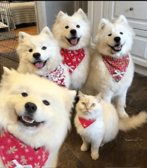 4 dogs and 1 different type of dog (via): 4 dogs and 1 different type of dog (via)