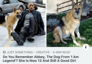 I Am Legend, Girl, and Good: 4 JUST SOMETHING CREATIVE 4-MIN READ  Do You Remember Abbey, The Dog From 'I Am  Legend'? She Is Now 13 And Still A Good Girl Good girl is still as good years later