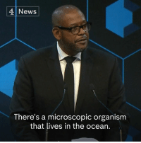 "Forest Whitaker uses a story about a bioluminescent organism to try and convince business leaders at Davos to help ""create peace in the world"".  The actor, who founded the International Institute for Peace and the Whitaker Peace and Development Initiative, was being awarded for leadership in peace-building and conflict resolution.: 4 News  There's a microscopic organism  that lives in the ocean. Forest Whitaker uses a story about a bioluminescent organism to try and convince business leaders at Davos to help ""create peace in the world"".  The actor, who founded the International Institute for Peace and the Whitaker Peace and Development Initiative, was being awarded for leadership in peace-building and conflict resolution."