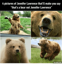 """9gag, Dank, and Jennifer Lawrence: 4 pictures of Jennifer Lawrence that'll make you say  """"that's a bear not Jennifer Lawrence""""  VIA 9GAG.COM I bearly noticed the differences. 9GAG Mobile App: www.9gag.com/mobile?ref=9fbp  http://9gag.com/gag/a5rzqnO?ref=fbp"""