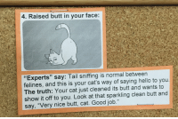 """Butt, Cats, and Hello: 4. Raised butt in your face  Experts"""" say: Tail sniffing is normal between  felines, and this is your cat's way of saying hello to you  The truth: Your cat just cleaned its butt and wants to  show it off to you. Look at that sparkling clean butt and  say, """"Very nice butt, cat. Good job"""