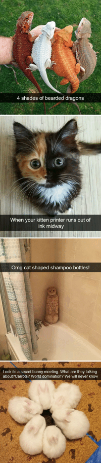 animalsnaps:Animal snaps: 4 shades of bearded dragons   When your kitten printer runs out of  ink midway   Omg cat shaped shampoo bottles!   Look its a secret bunny meeting. What are they talking  about?Carrots? World domination? We will never know animalsnaps:Animal snaps