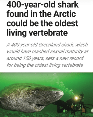 loloftheday:  The shark actually looks relieved someone finally found him: 400-year-old shark  found in the Arctic  could be the oldest  living vertebrate  A 400-year-old Greenland shark, which  would have reached sexual maturity at  around 150 years, sets a new record  for being the oldest living vertebrate loloftheday:  The shark actually looks relieved someone finally found him