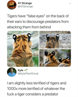 "Shut up kyle via /r/memes https://ift.tt/2JKMwWx: 41 Strange  @41Strange  Tigers have ""false eyes"" on the back of  their ears to discourage predators from  attacking them from behind  Kyle  @KylePlantEmoji  I am slightly less terrified of tigers and  1000x more terrified of whatever the  fuck a tiger considers a predator Shut up kyle via /r/memes https://ift.tt/2JKMwWx"