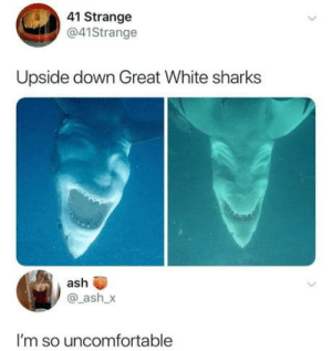 Ash, Club, and Tumblr: 41 Strange  @41Strange  Upside down Great White sharks  ash  @_ash_x  I'm so uncomfortable laughoutloud-club:  Wut in tarnation