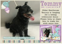 """Cats, Children, and Comfortable: 41592 1l years old, 4Z Ibs  Older Gentleman  Tommy is longing  for a loving  retirement home-  Please help us share  him to make his  wish come true  @manhattan acc waiting for LOVE **** TO BE KILLED - 9/21/2018 ****  After years with his master, Tommy's beloved BFF has grown older and too ill to care for him any longer. Making matters worse, there's no one else in the family willing to take care of Tommy and allow his former master to have some type of peace of mind, knowing that if he (or she) can't take of Tommy at least someone in the family can and will and Tommy's going to be ok. But thats not the case. No one took Tommy. No one took him home anyway. They took him to the closest """"shelter"""" which happened to be high kill and now Tommy's on the euth list, scheduled to die. He's a very sad boy and pretty confused about his situation, but he's trying to make friends because Tommy's cool like that. He's known to be friendly, affectionate and playful. He also doesn't eat dog food - prefers rice, beans and chicken he always ate with his master but Tommy will eat dog food and love you until the end if you can promise him his life, safety and lots of love in a committed retirement home. Please help us help 11 year Tommy walk out of this shelter a happy boy.   TOMMY@MANHATTAN ACC Hello, my name is Tommy My animal id is #41592 I am a male black dog at the  Manhattan Animal Care Center The shelter thinks I am about 11 years old, 47 lbs  Came into shelter as a stray Sept. 15, 2018 Tommy is rescue only   Tommy is at risk due to medical and behavior concerns. Tommy has been diagnosed with Canine Infectious Respiratory Disease Complex which is contagious to other dogs. We also recommend placing Tommy in an adult only environment with one of our New Hope partners due to previous bite history and behavior noted in the care center.  My medical notes are... Weight: 47.6 lbs Vet Notes 17/09/2018 [DVM Intake] DVM Intake Exam Estimated age: 11 years M"""