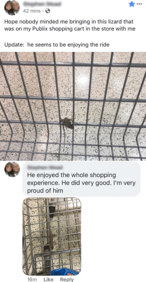 my dad did some wholesome grocery shopping today: 42 mins  Hope nobody minded me bringing in this lizard that  was on my Publix shopping cart in the store with me  Update: he seems to be enjoying the ride  He enjoyed the whole shopping  experience. He did very good. I'm very  proud of him  Like  Reply  16m my dad did some wholesome grocery shopping today