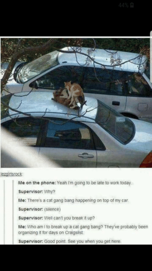 gang freakin bang: 44% A  lezgirlsrock  Me on the phone: Yeah I'm going to be late to work today.  Supervisor: Why?  Me: There's a cat gang bang happening on top of my car.  Supervisor: (silence)  Supervisor: Well can't you break it up?  Me: Who am I to break up a cat gang bang? They've probably been  organizing it for days on Craigslist.  Supervisor: Good point. See you when you get here. gang freakin bang