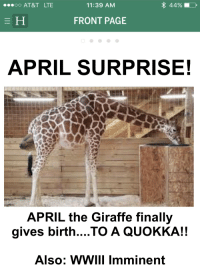 April The Giraffe: 44%  OO AT&T LTE  11:39 AM  FRONT PAGE  APRIL SURPRISE!  APRIL the Giraffe finally  gives birth... TO A QUOKKA!!  Also: WWIII imminent