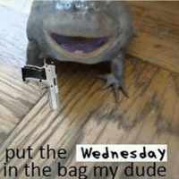 and nobody gets memed.: put the Wednesday  in the bag my dude and nobody gets memed.