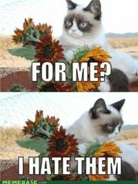FOR ME  I HATE THEM  MEME BASE  COM join Grumpy Cat. for more!