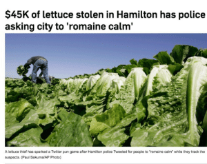"""allthecanadianpolitics:Meanwhile in Canada.: $45K of lettuce stolen in Hamilton has police  asking city to 'romaine calm'  A lettuce thief has sparked a Twitter pun game after Hamilton police Tweeted for people to """"romaine calm"""" while they track the  suspects. (Paul Sakuma/AP Photo) allthecanadianpolitics:Meanwhile in Canada."""
