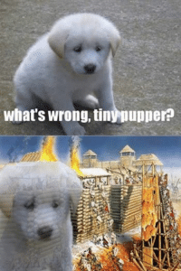 Pupper remembers...: what's wrong, tinynupperp Pupper remembers...