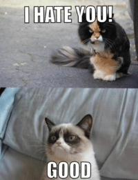 Join Grumpy Cat. for more ( :: I HATE YOU!  GOOD Join Grumpy Cat. for more ( :