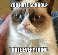 join Grumpy Cat. for more : ): YOU HATE SCHOOL?  IHATE EVERYTHING join Grumpy Cat. for more : )