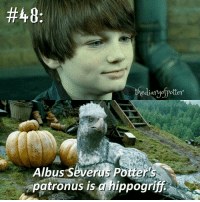 Comment '😍' if you knew this and '😮' if you didn't! harrypotter thechosenone theboywholived gryffindor hippogriff albuspotter albusseveruspotter jkrowling harrypottercasts harrypotterfan harrypotterfilm harrypotterfact harrypotterfacts • Potterheads⚡count: 58,727:  #48  the diaryofpotter  Albus Severus Potter's  patronus is a hippogriff Comment '😍' if you knew this and '😮' if you didn't! harrypotter thechosenone theboywholived gryffindor hippogriff albuspotter albusseveruspotter jkrowling harrypottercasts harrypotterfan harrypotterfilm harrypotterfact harrypotterfacts • Potterheads⚡count: 58,727