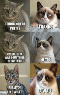 Cats, Grumpy Cat, and Cat: I THINK YOURE  PRETTY  I WISH THERE  WAS SOMETHING  BETWEEN US  REALLY  LIKE WHAT  THANKS  ME TOO  A WALL Join Grumpy Cat. for more ( :