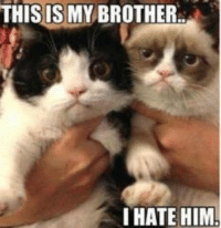 Cats, Grumpy Cat, and Smile: THIS IS MY BROTHER  I HATE HIM Poor pokey! -_______- Join Grumpy Cat. smile emoticon