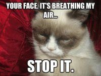 Cats, Meme, and Memes: YOUR FACE IT'S BREATHING MY  AIR  STOP IT  quick meme con join Grumpy Cat. for more ( :