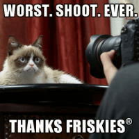 Join -> Grumpy Cat. for more ( :: WORST. SHOOT EVER.  THANKS FRISKIES Join -> Grumpy Cat. for more ( :