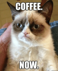Join Grumpy Cat. for more ( :: COFFEE.  NOW Join Grumpy Cat. for more ( :