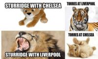So true! [ Credit to Fáŕáźđq Łfĉ ]: STURRIDGE WITH CHELSEA  TORRESAT LIVERPOOL  TORRES ATCHELSEA  STURRIDGE WITH LIVERPOOL So true! [ Credit to Fáŕáźđq Łfĉ ]