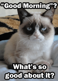 "Join Grumpy Cat. for more ( :: Good Morning""?  What's so  good about it? Join Grumpy Cat. for more ( :"