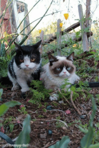 Tardar Sauce and her brother Pokey! smile emoticon: 02013  Orurmpy Tardar Sauce and her brother Pokey! smile emoticon