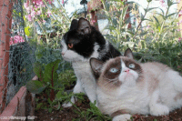 Pokey & Tardar Sauce!:D if you love animals and love to laugh, then join Animal Memes.: 02013 Grumpy Cat Pokey & Tardar Sauce!:D if you love animals and love to laugh, then join Animal Memes.