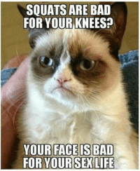 Join Animal Memes. if you love animals grin emoticon: SQUATS ARE BAD  FOR YOUR KNEES:D  YOUR FACE IS BAD  FOR YOUR SEX LIFE Join Animal Memes. if you love animals grin emoticon