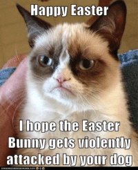 Bunnies, Cats, and Dogs: Happy Easter  Bunny gets violently  attacled by your dog join Grumpy Cat. for more ( :