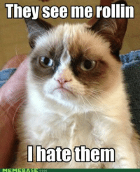 join Grumpy Cat. for more ( :: They see me rollin  I hate them  MEME BASE COM join Grumpy Cat. for more ( :