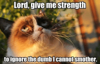 Cats, Ignorant, and Grumpy Cat: Lord, give me strength  to ignore the dumbl  cannot Smother. Join -> Grumpy Cat. for more smile emoticon