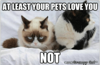 Grumpy Cat. & Pokey.: AT LEAST YOUR PETS LOVE YOU  NOT  2013 Grumpy Cat  TM Grumpy Cat. & Pokey.