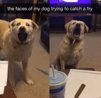 dog face: the faces of my dog trying to catch a fry