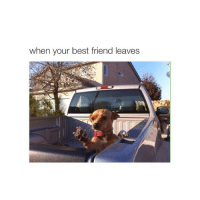 Best Friend, Friends, and Best: when your best friend leaves goodnight again