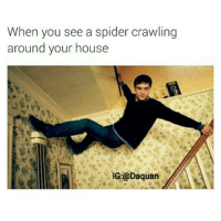 Ion play around when it comes to spiders: When you see a spider crawling  around your house  IG:@Daquan Ion play around when it comes to spiders