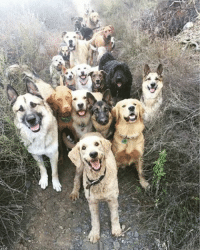 9gag, Cute, and Memes: :4D I don't know what their gang is called but I wanna join. Follow @9gag 9gag goodboy cute