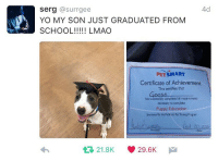 BORK U 📚: 4d  Serg  @surrgee  YO MY SON JUST GRADUATED FROM  SCHOOL!!!!! LMAO  PETSMART  Certificate of Achievement  This certifies that  has successfully completed all requirements  necessary to complete  Puppy Education  Sponsored By the PetSmart Pet Training Program  21.8K 29.6K  M  tt BORK U 📚