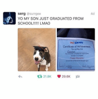 GOOOOOOZEE: 4d  Serg  @surrgee  YO MY SON JUST GRADUATED FROM  SCHOOL LMAO  PETSMART  Certificate of Achievement  This certifies that  Goos  has successtily compleped all requirements  necessary to complete  Puppy Education  21.8K V 29.6K  M  tR, GOOOOOOZEE