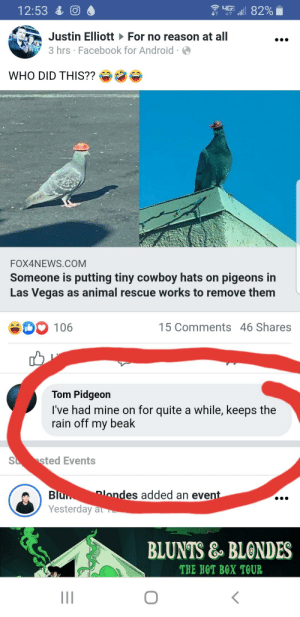 Username checks out: 4GE  12:53 & O  Justin Elliott For no reason at all  3 hrs · Facebook for Android ·  WHO DID THIS??  FOX4NEWS.COM  Someone is putting tiny cowboy hats on pigeons in  Las Vegas as animal rescue works to remove them  15 Comments 46 Shares  106  Tom Pidgeon  I've had mine on for quite a while, keeps the  rain off my beak  S sted Events  Plondes added an event  Blu  Yesterday at -  BLUNTS & BLONDES  THE HOT BOX TOUR Username checks out