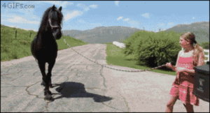 Beautiful, Target, and Tumblr: 4GIF5.conm 4gifs:Stallion wants to be a father.  [video]